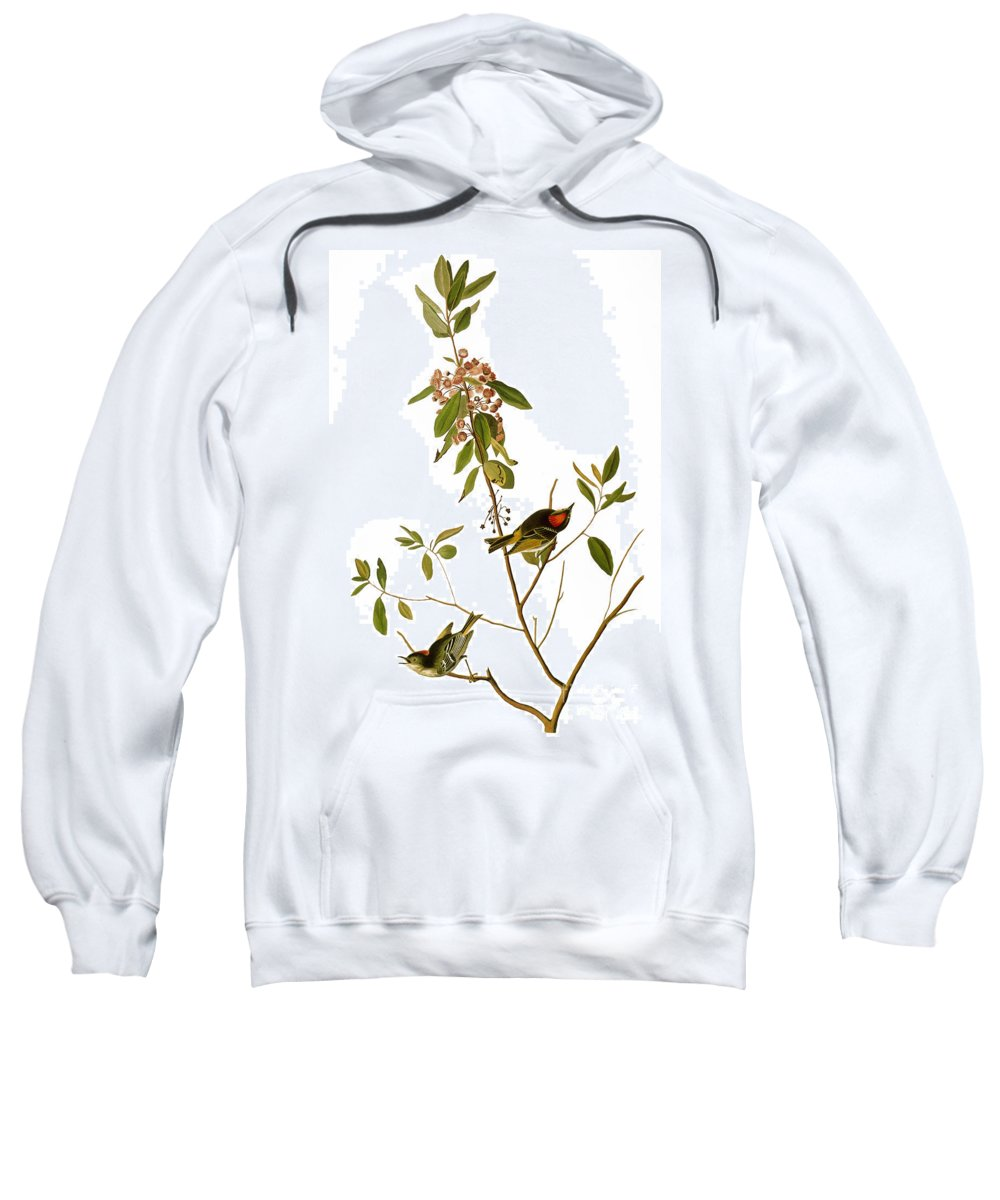 1827 Sweatshirt featuring the photograph Audubon: Kinglet, 1827 by Granger