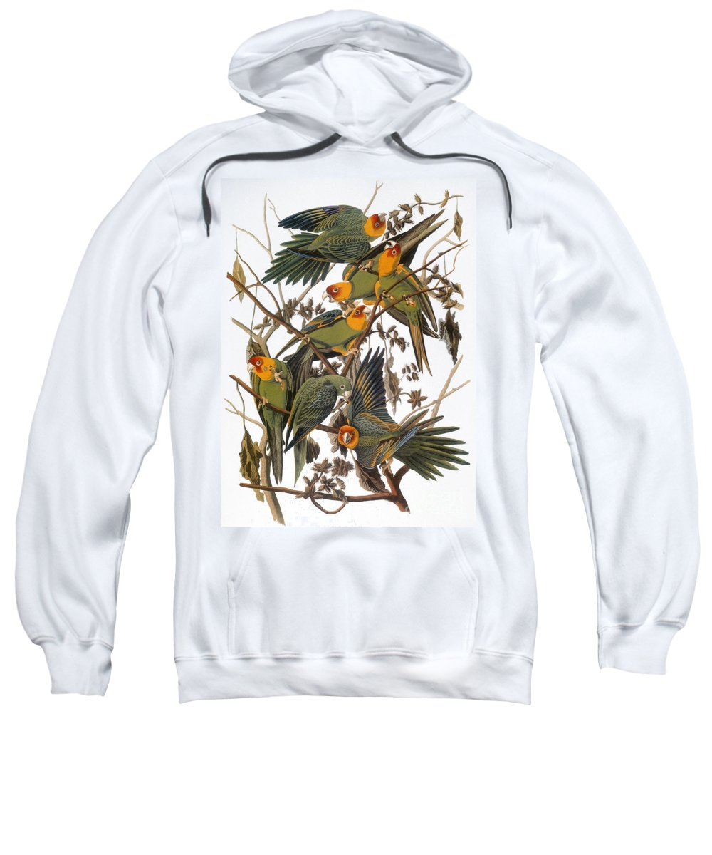 American Sweatshirt featuring the photograph Audubon: Parakeet by Granger