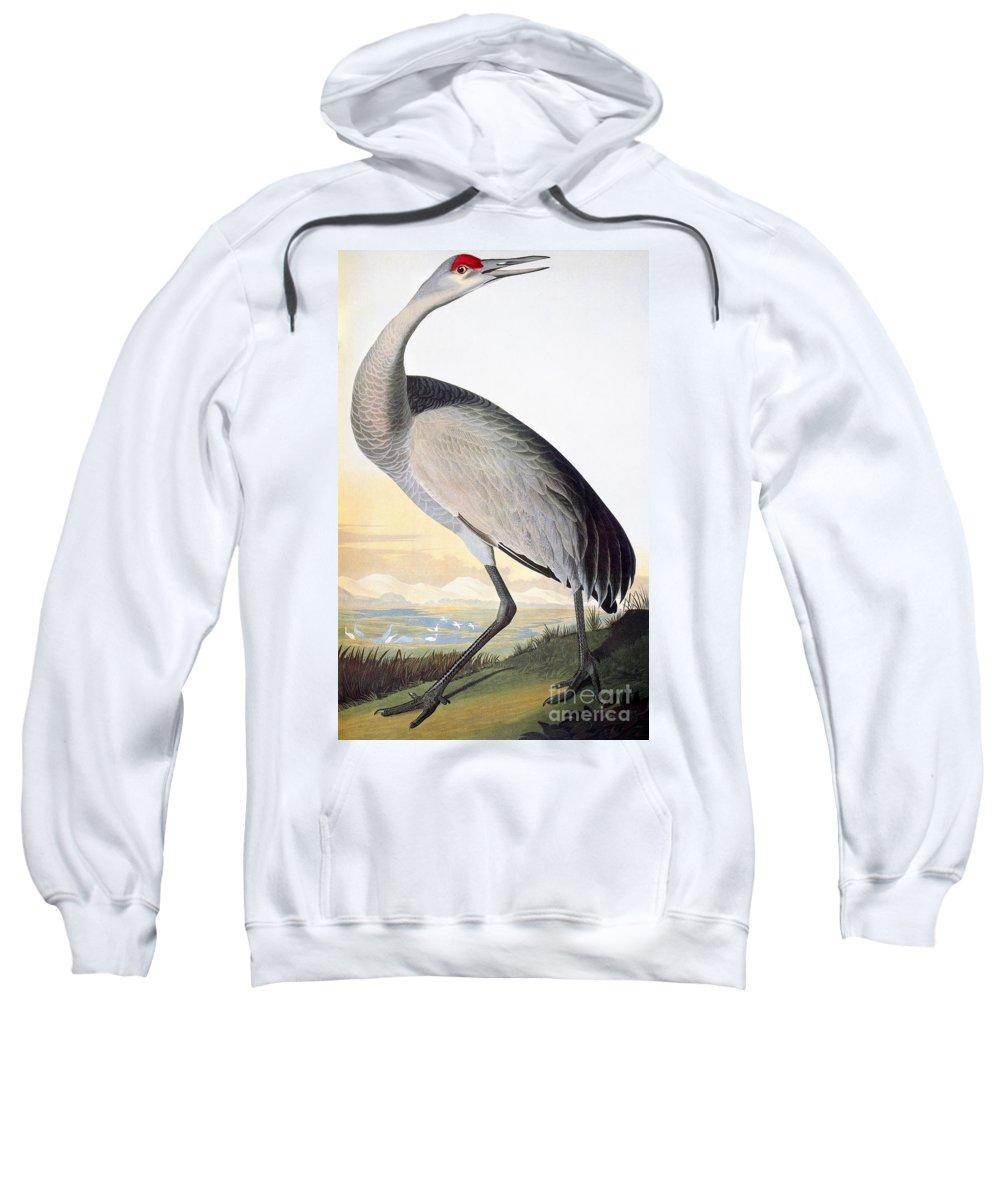 1827 Sweatshirt featuring the photograph Audubon Sandhill Crane by John James Audubon