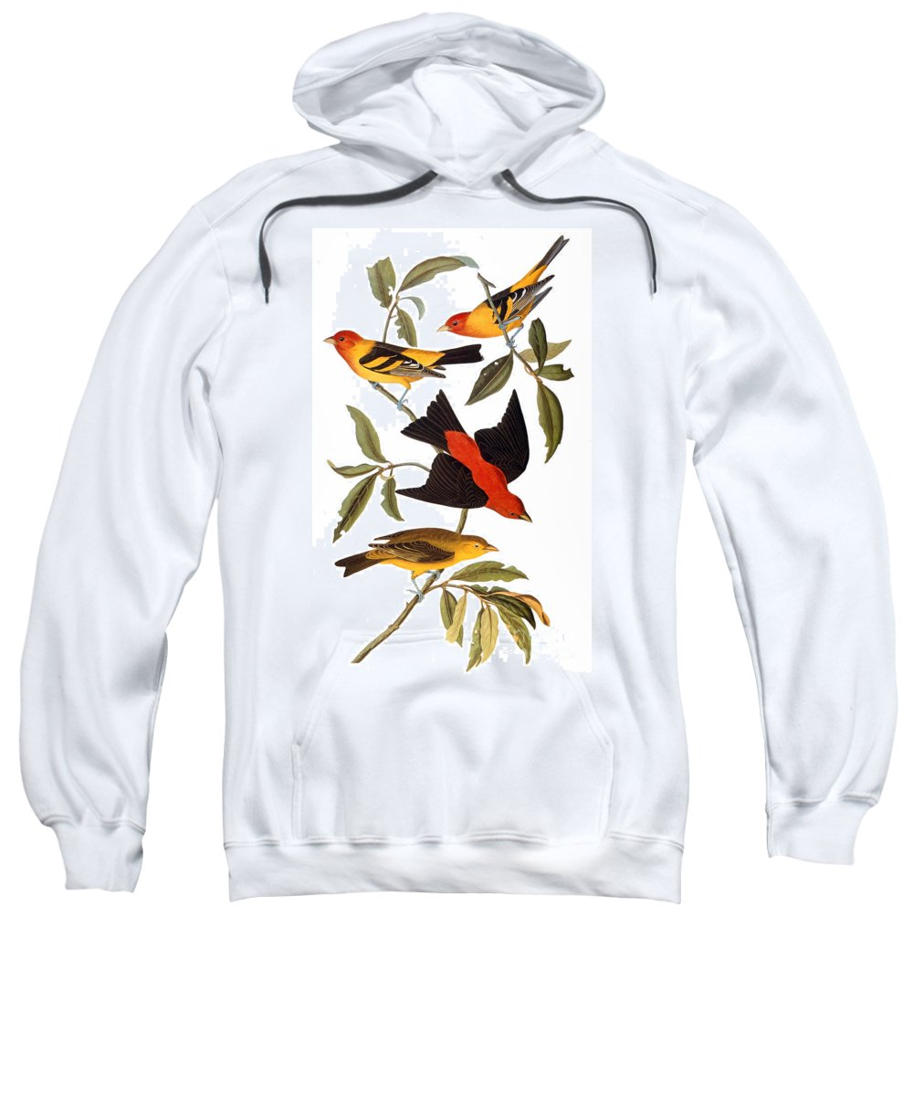 1827 Sweatshirt featuring the photograph Audubon: Tanager, 1827 by Granger