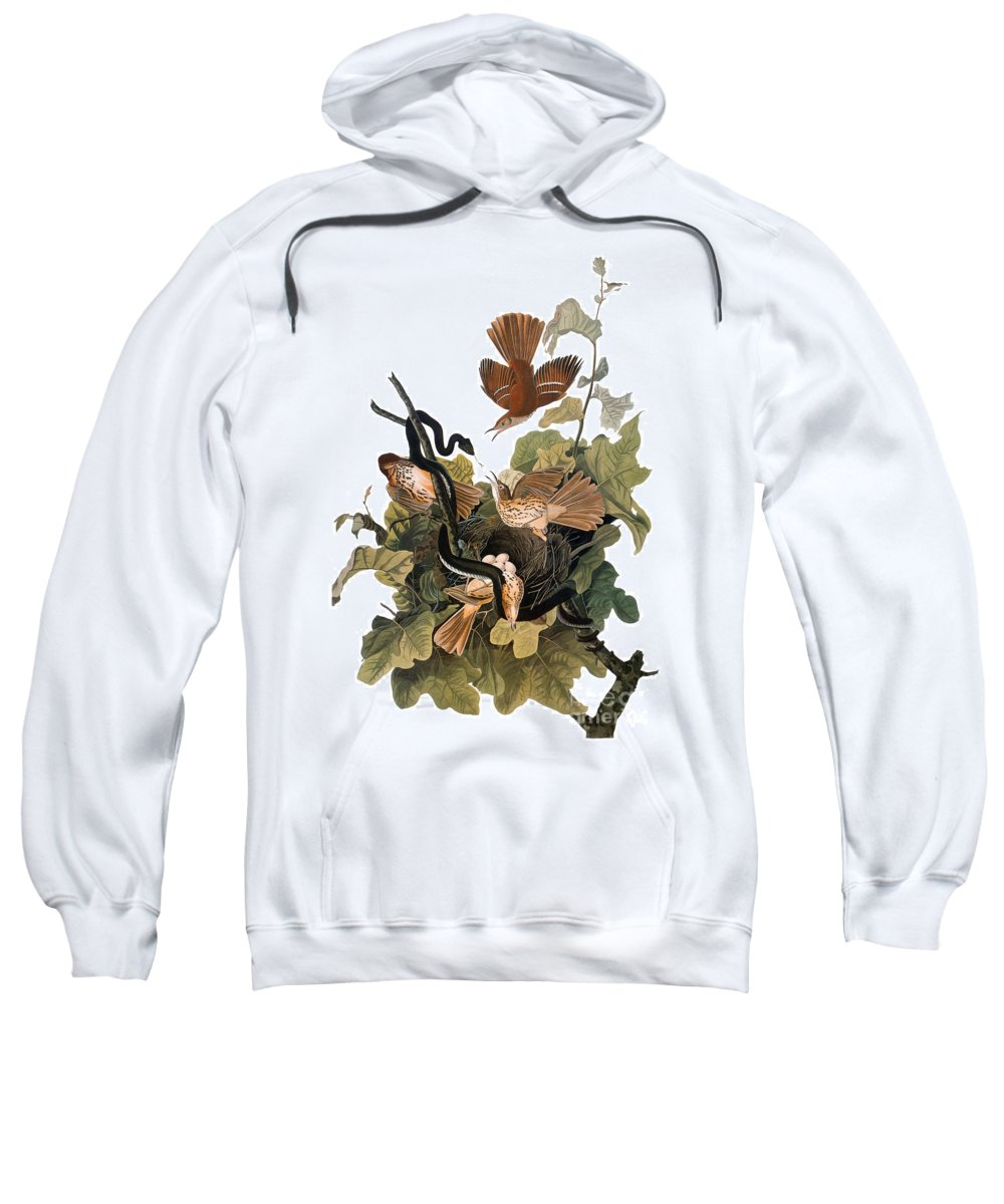 1838 Sweatshirt featuring the photograph Audubon: Thrasher by Granger