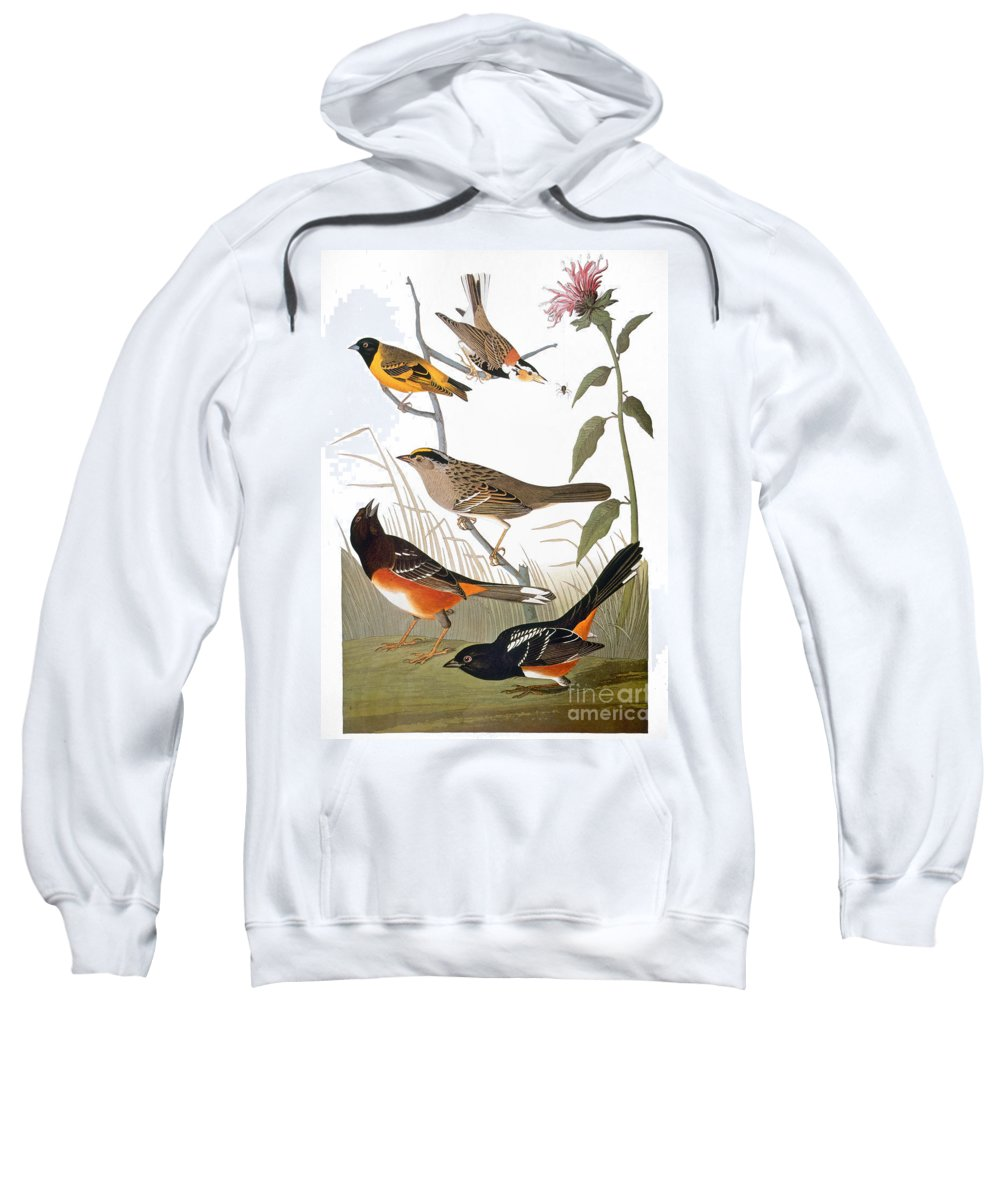 1838 Sweatshirt featuring the photograph Audubon: Various Birds by Granger