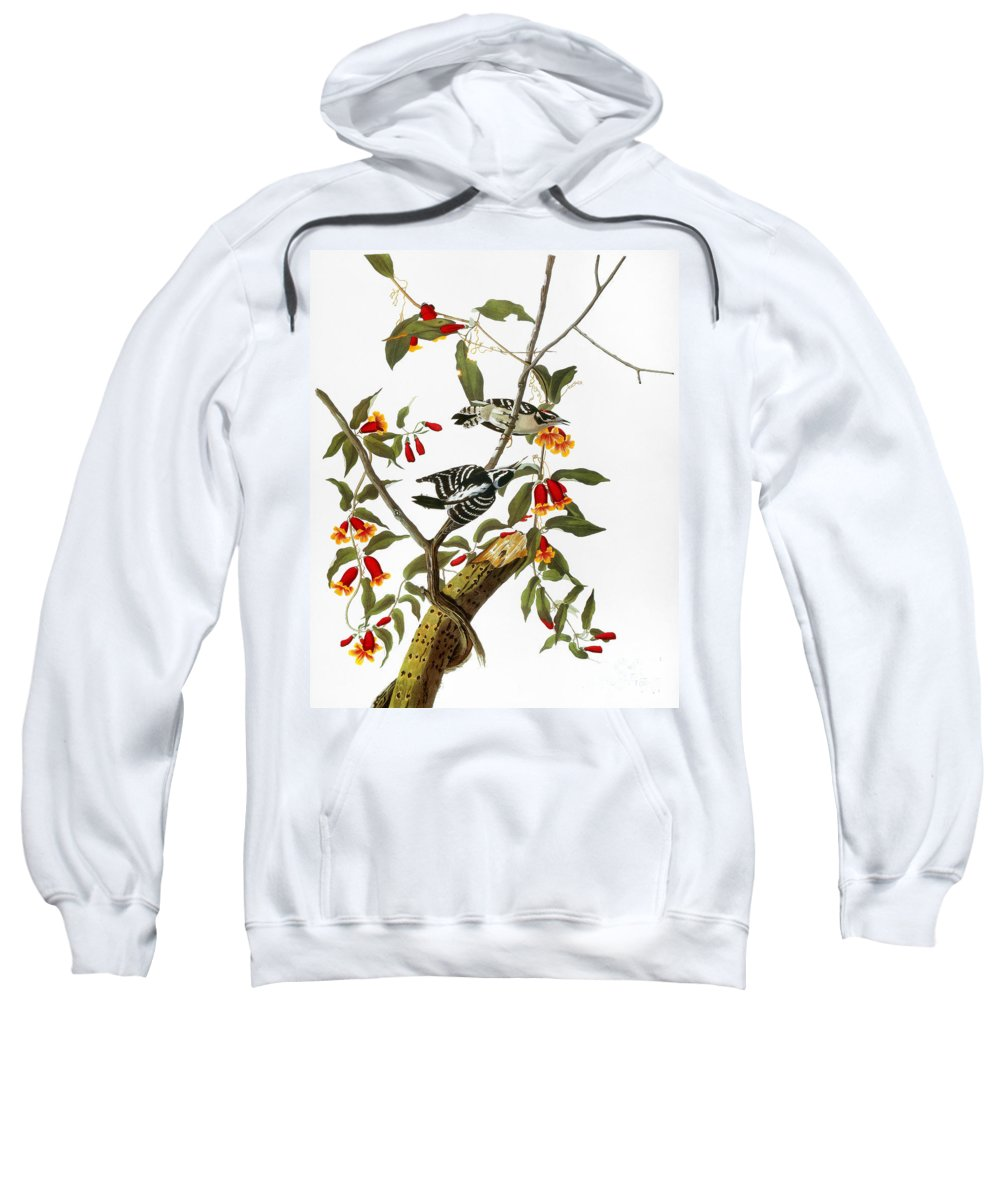 1827 Sweatshirt featuring the photograph Audubon: Woodpecker, 1827 by Granger
