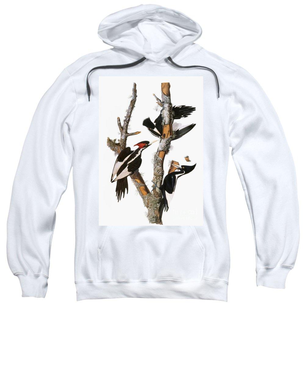 1838 Sweatshirt featuring the photograph Audubon: Woodpecker by Granger