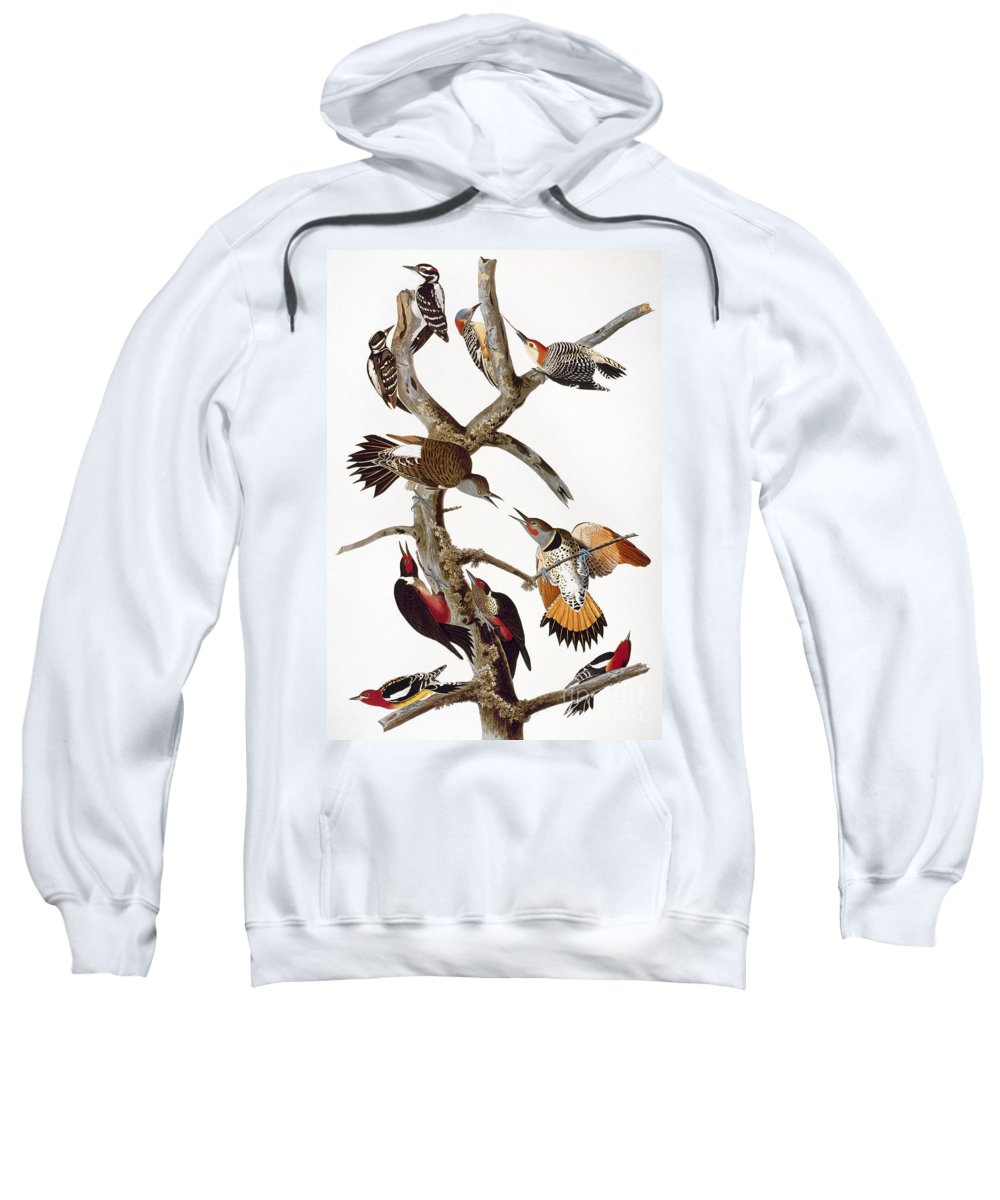 1838 Sweatshirt featuring the photograph Audubon: Woodpeckers by Granger