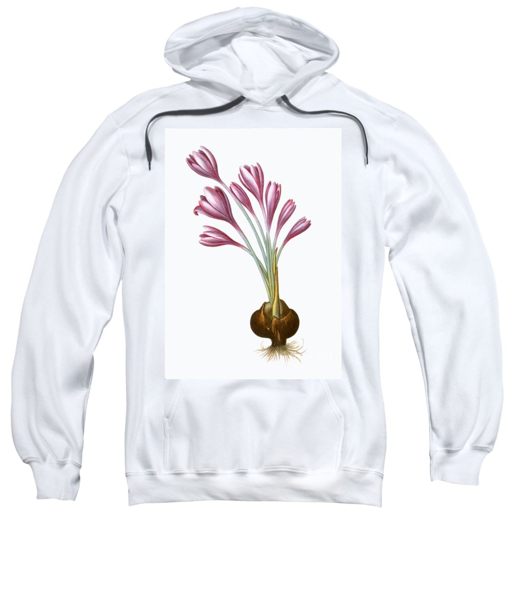 Aod Sweatshirt featuring the photograph Autumn Crocus by Granger