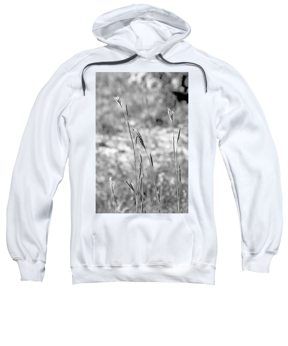 Autumn Sweatshirt featuring the photograph Autumn Grasses by Robert Meyers-Lussier