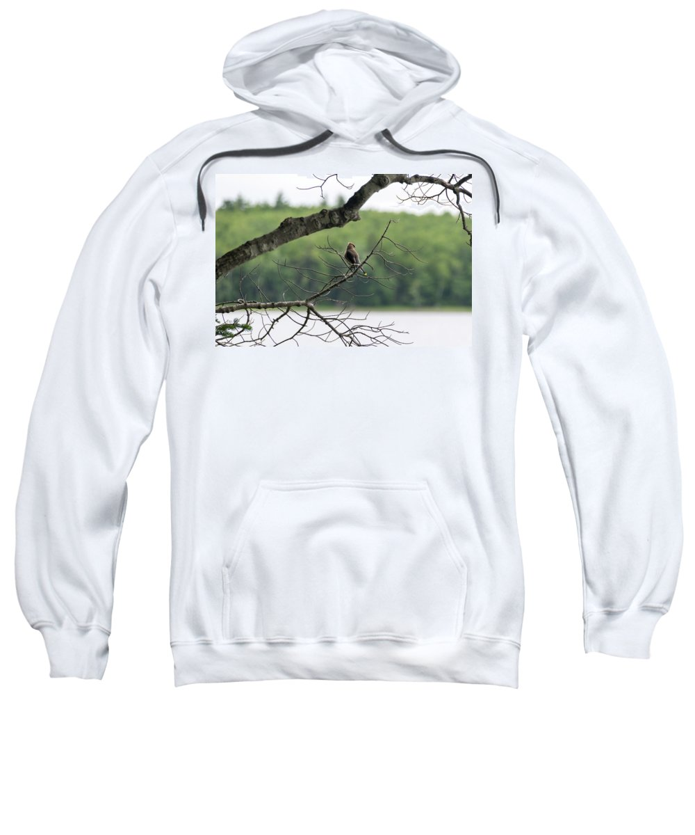 Kejimkujik Sweatshirt featuring the photograph Kejimkujik National Park - Bird by Irena Kazatsker