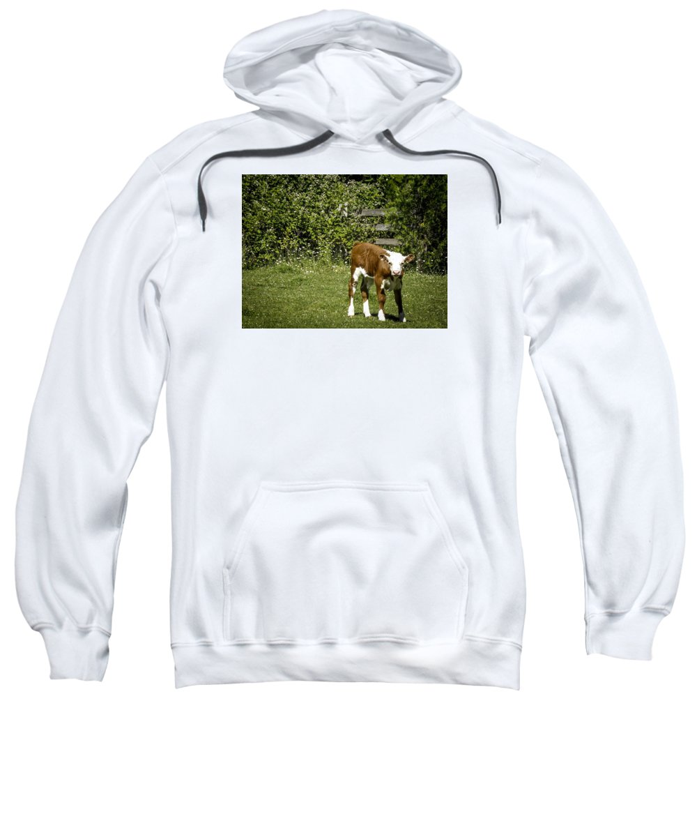 Sweatshirt featuring the photograph Baby Calf 2 by Reed Tim