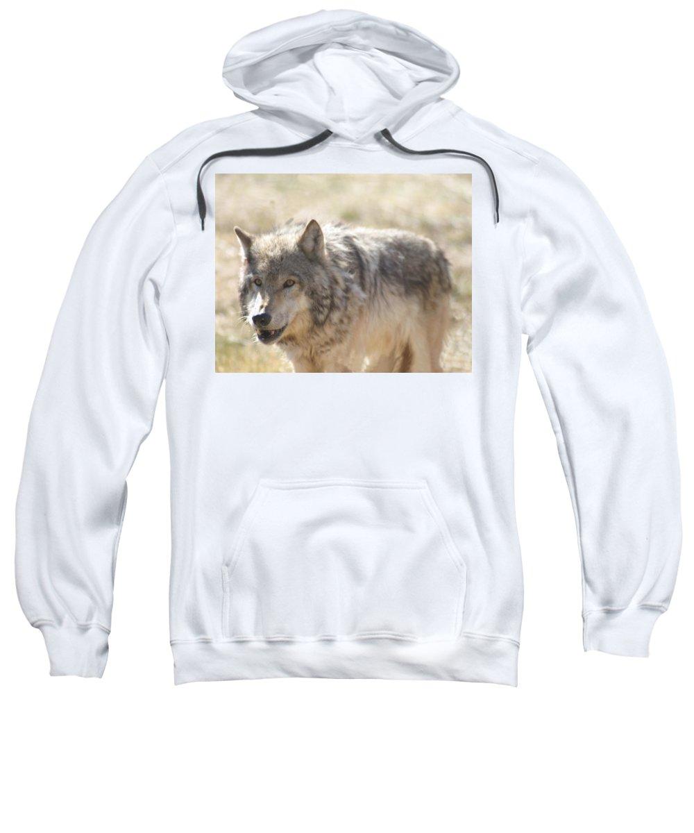 Wolf Sweatshirt featuring the digital art Back Off Buddy by Gary Baird