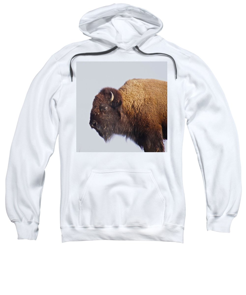 Animal Sweatshirt featuring the photograph Baffalo by Robert Pearson