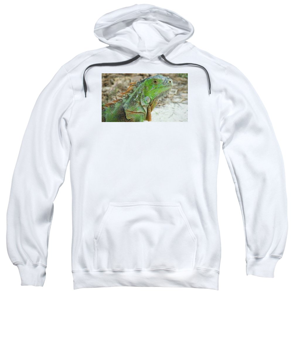 Iguana Sweatshirt featuring the photograph Bahia Honda Iguana by Judith L Schade
