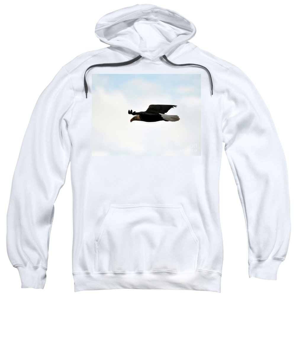 Bald Eagle Sweatshirt featuring the photograph Bald Eagle Flight by Al Powell Photography USA