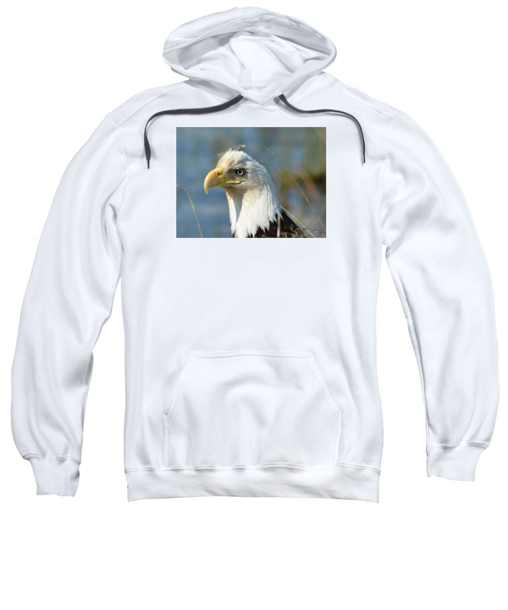 Bald Eagle Sweatshirt featuring the pyrography Bald Eagle by Sally Sperry