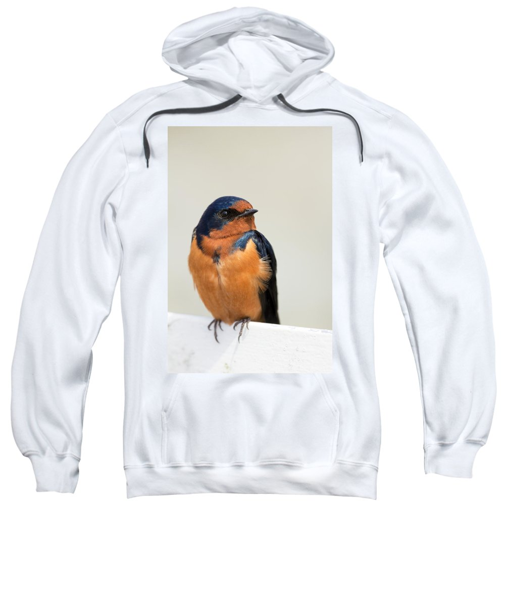Barn Swallow Sweatshirt featuring the photograph Barn Swallow Perched On A Fence by Jit Lim