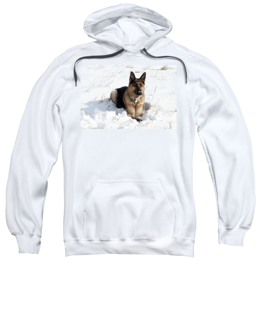 Gloucester Sweatshirt featuring the photograph Be Vewy Vewy Quiet by Greg Fortier