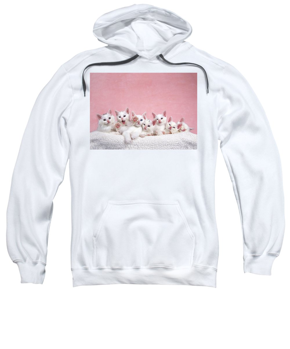 Small Sweatshirt featuring the photograph Bedtime Kittens I'm Not Tired Mom by Sheila Fitzgerald