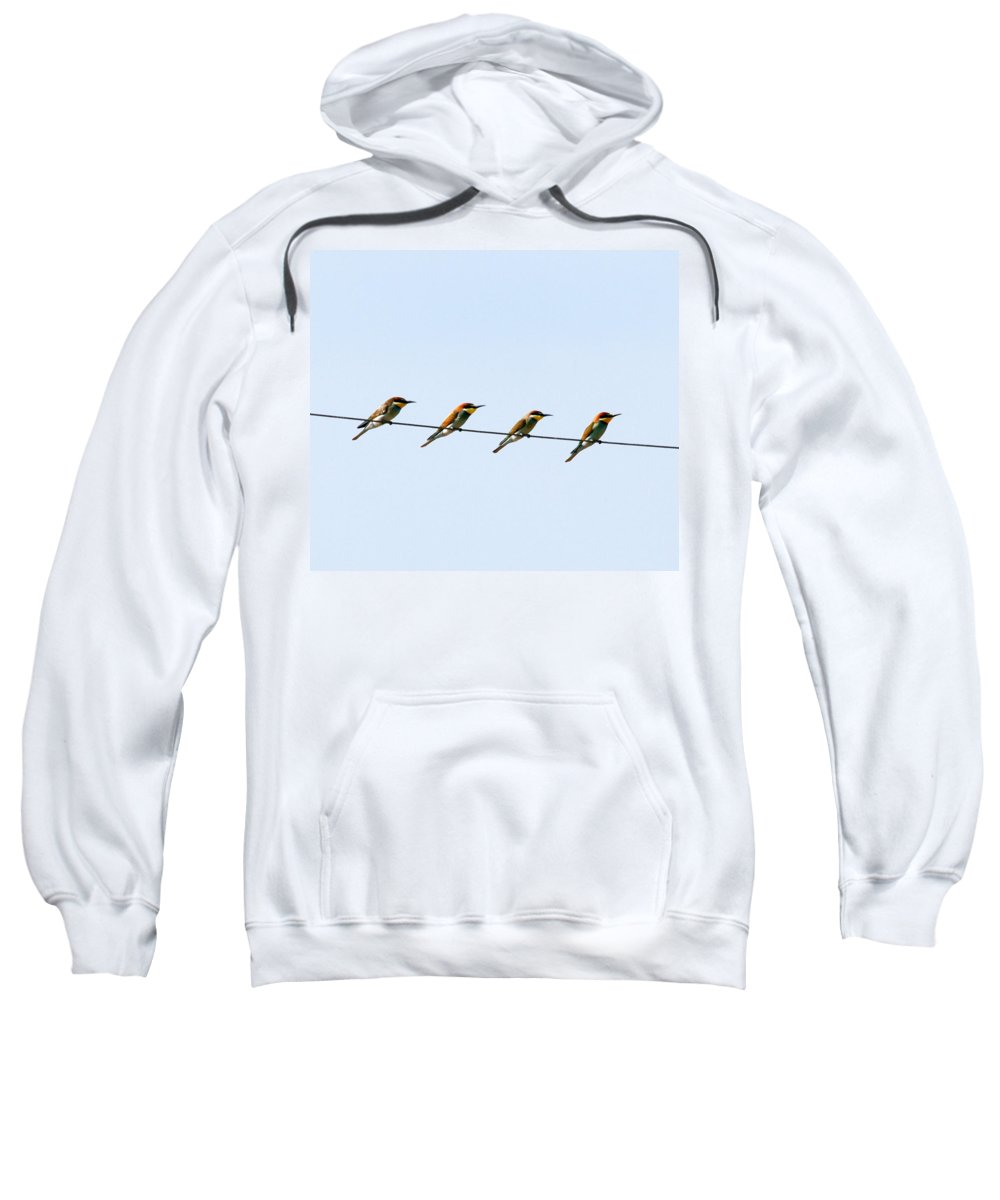 Bee Eaters Sweatshirt featuring the photograph Bee Eaters On A Witre by Cliff Norton