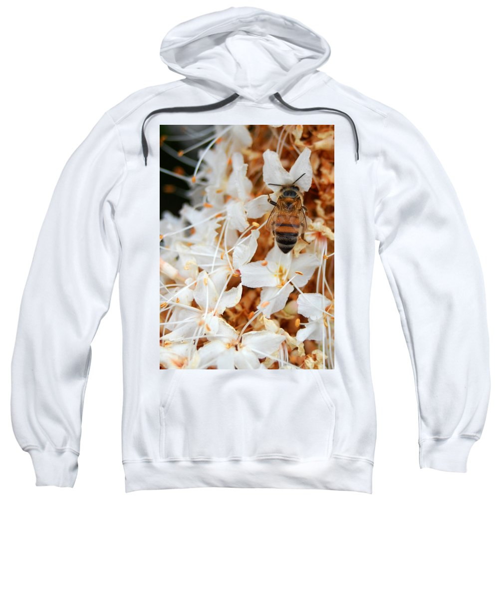 Flower Sweatshirt featuring the photograph Bee On Flowers 2 by Amy Fose