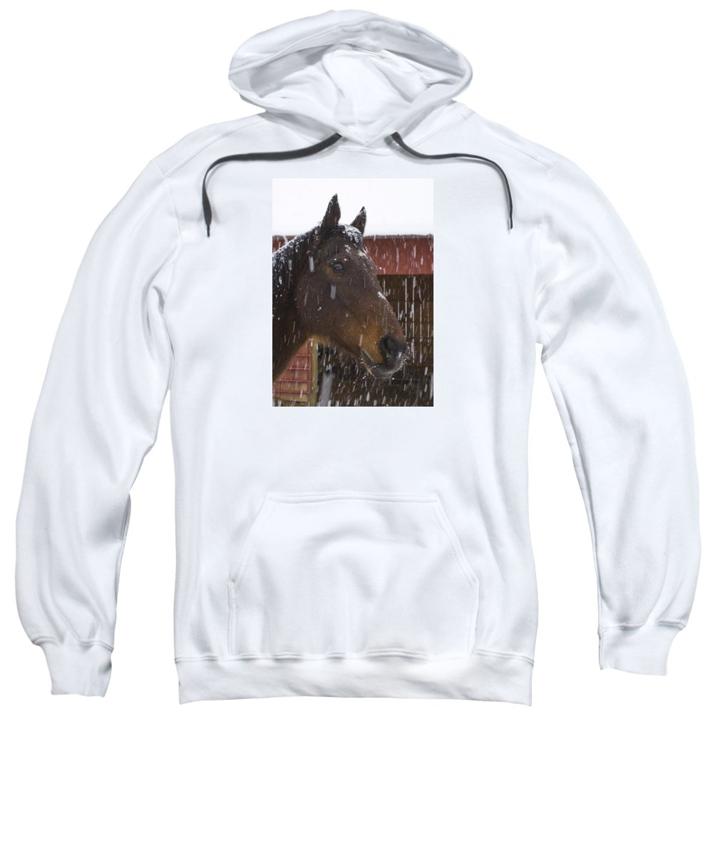 Horse Sweatshirt featuring the photograph Bentley In The Snow by Frederica Georgia