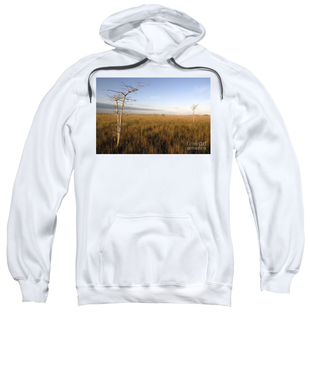 Bald Cypress Sweatshirt featuring the photograph Big Cypress by David Lee Thompson