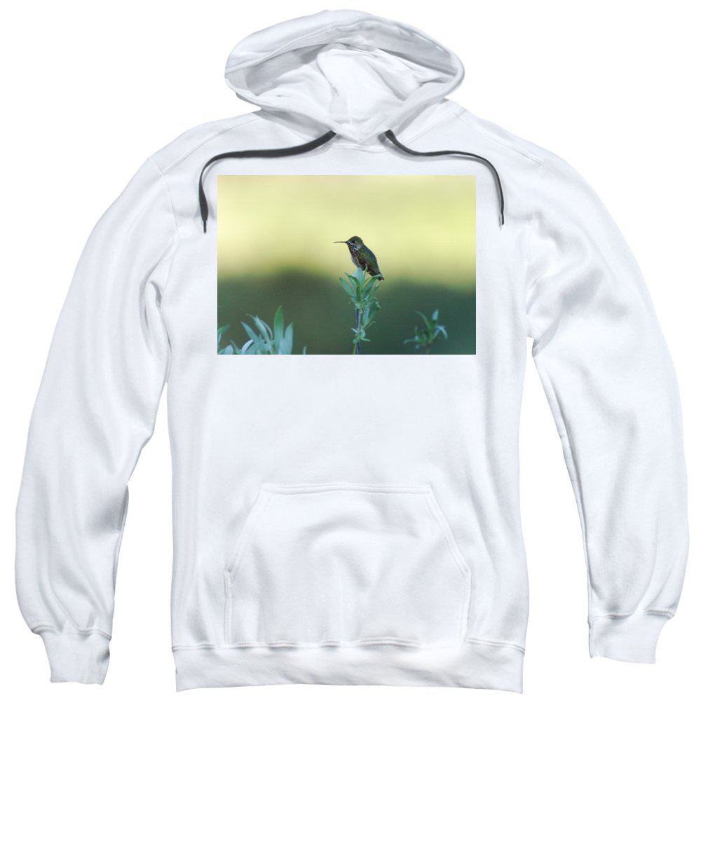 Hummingbird Sweatshirt featuring the photograph Big World by Donna Blackhall