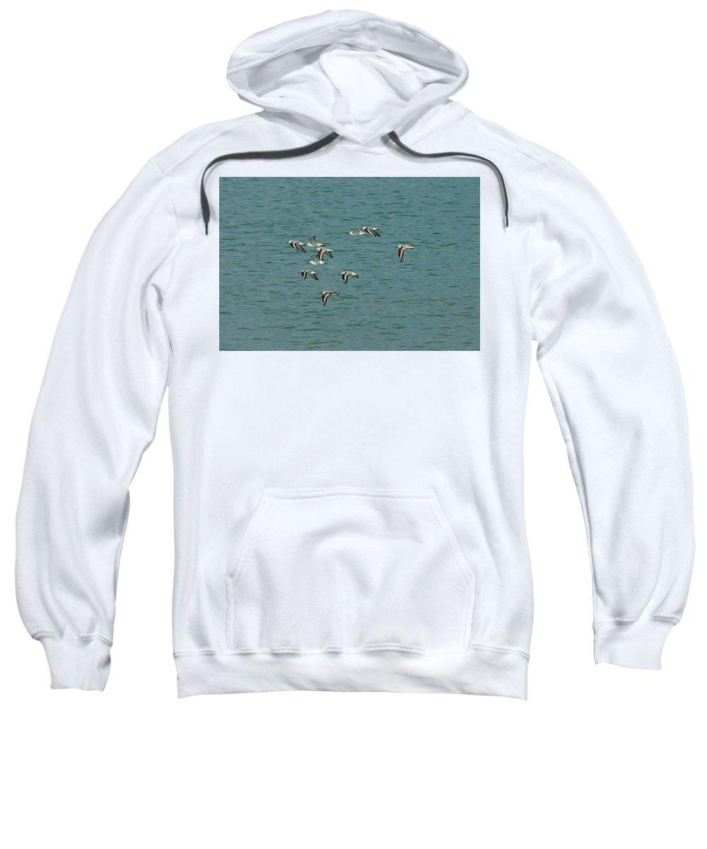 Bird Sweatshirt featuring the photograph Birds In Flight by Colleen Fox