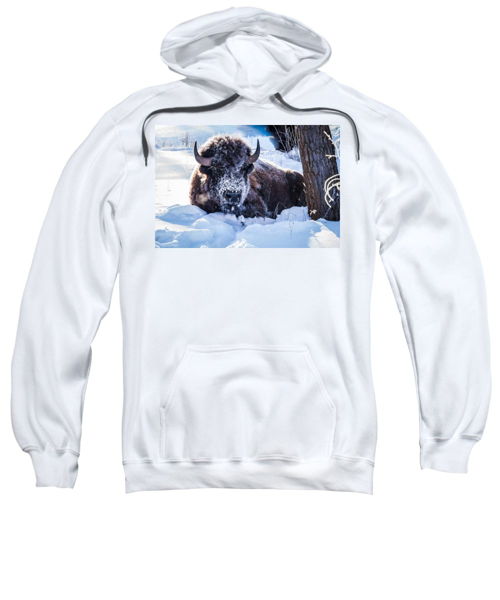 Bison Sweatshirt featuring the photograph Bison At Frozen Dawn by Yeates Photography