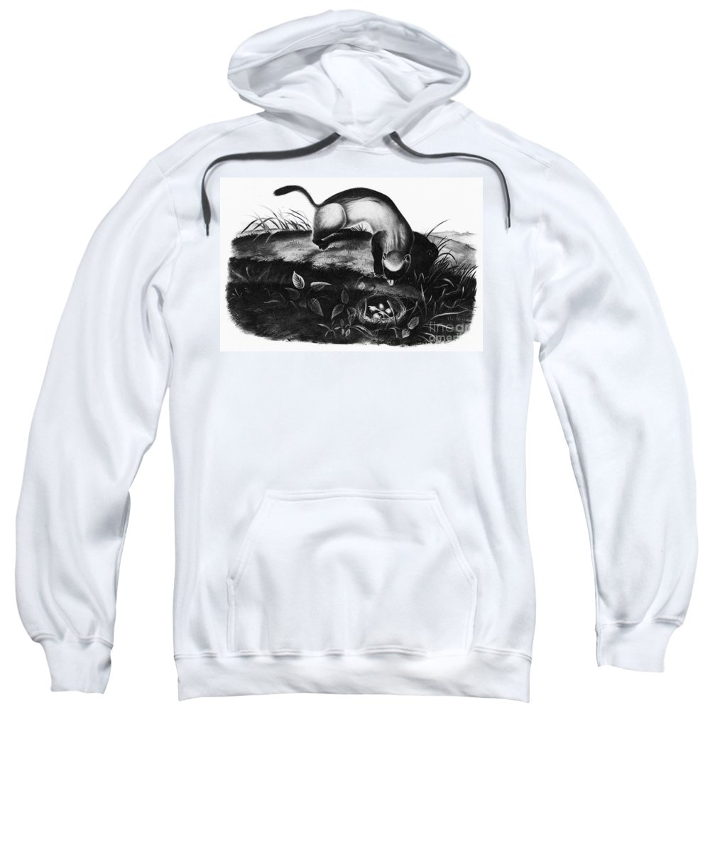 1846 Sweatshirt featuring the photograph Black-footed Ferret by Granger
