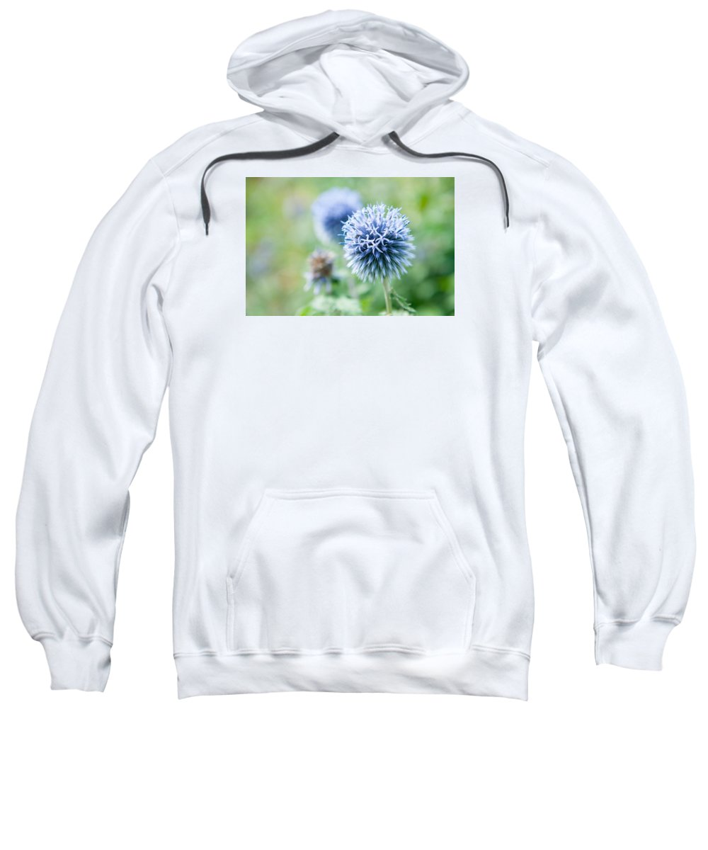 Globe Thistle Sweatshirt featuring the photograph Blue Globe Thistle Flower by Helen Northcott