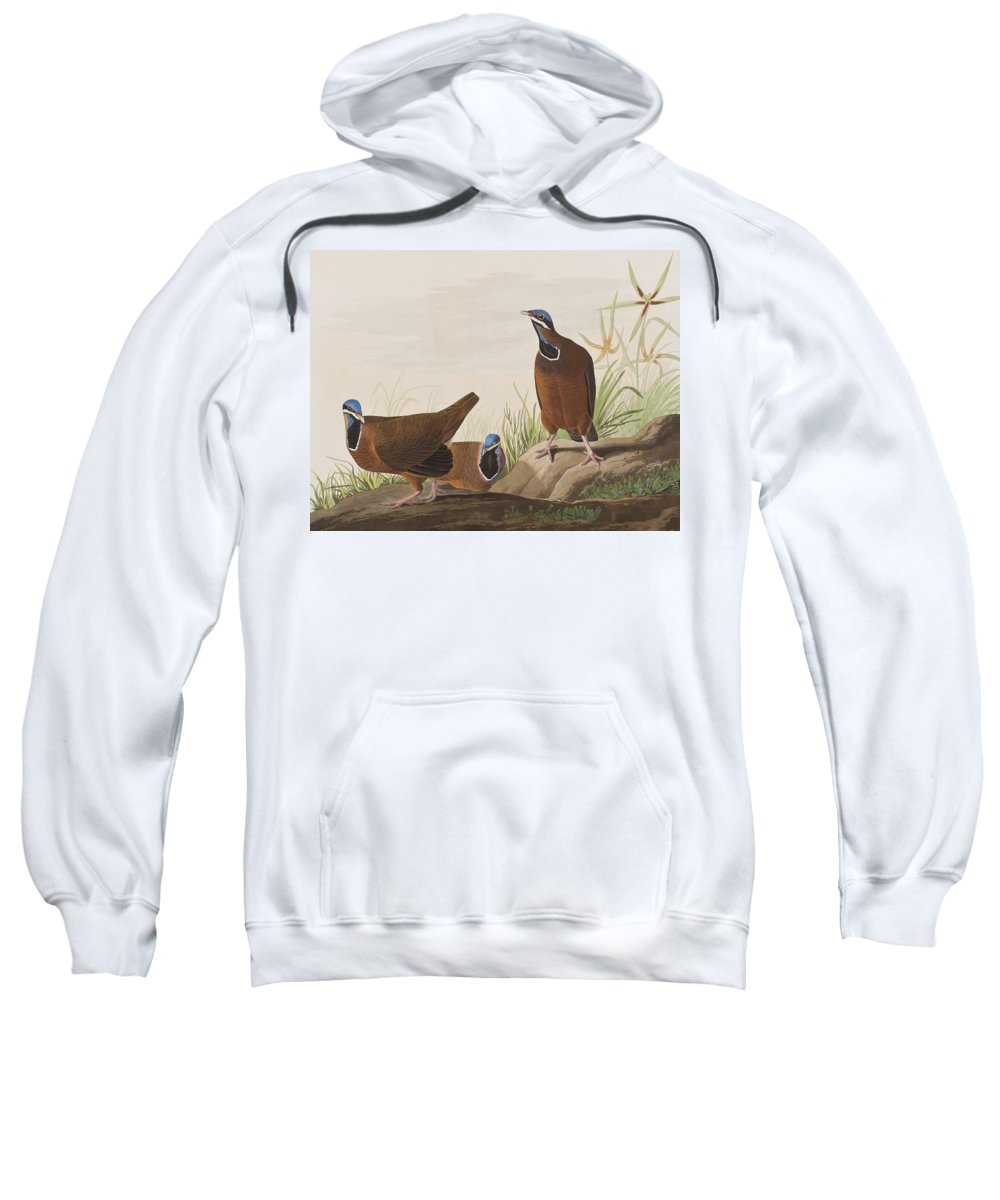Blue-headed Pigeon Sweatshirt featuring the painting Blue Headed Pigeon by John James Audubon