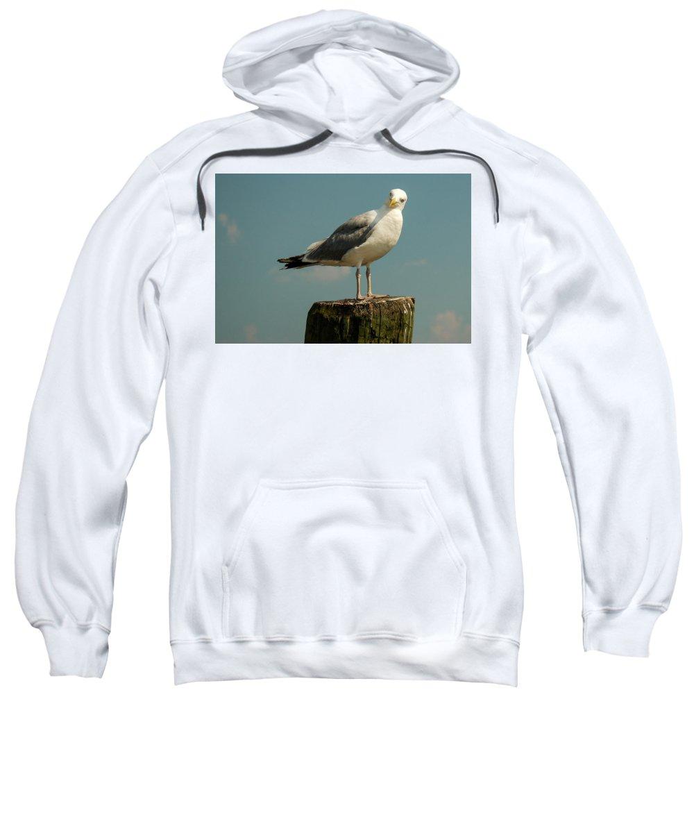 Boston Sweatshirt featuring the photograph Boston Bay Birdy by Vm Vassolo