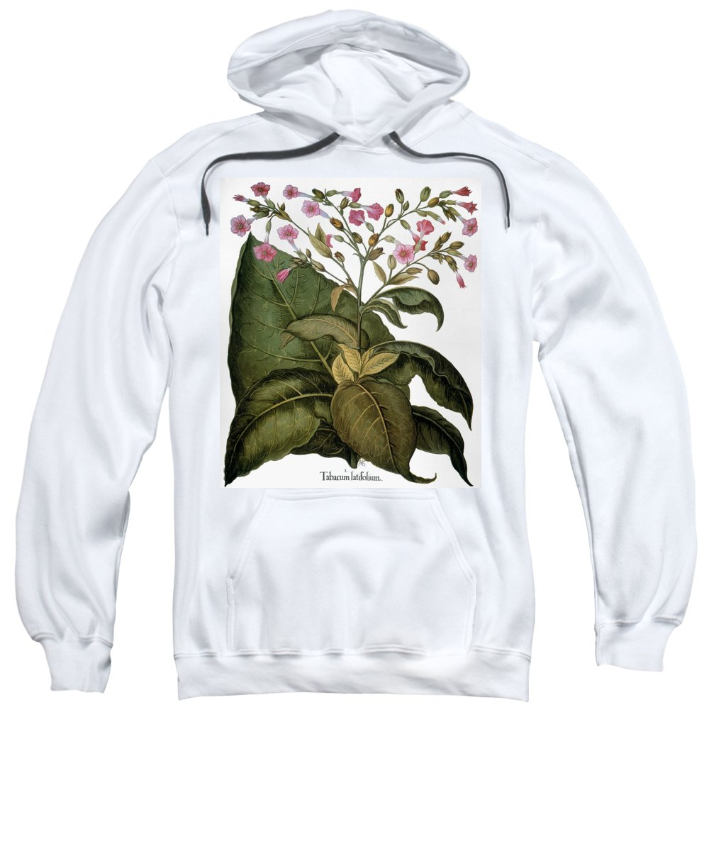 1613 Sweatshirt featuring the photograph Botany: Tobacco Plant by Granger