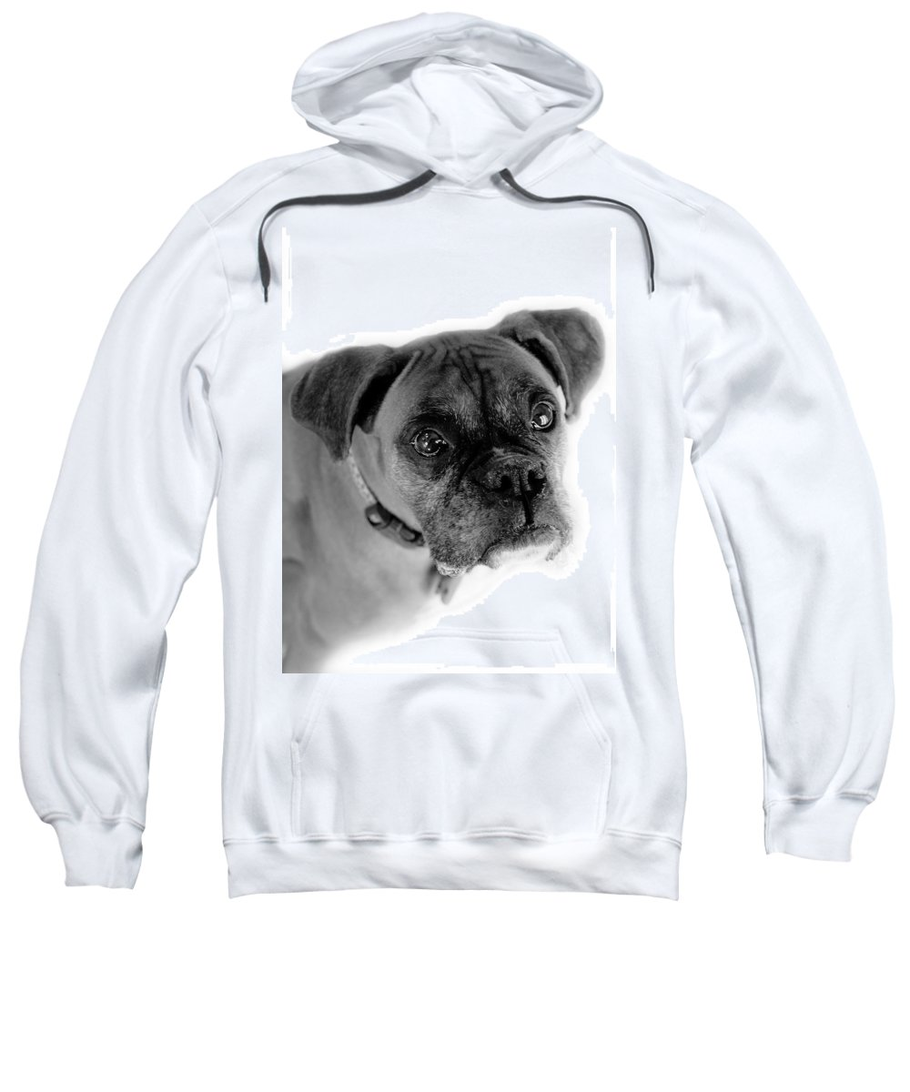 Boxer Sweatshirt featuring the photograph Boxer Dog by Marilyn Hunt