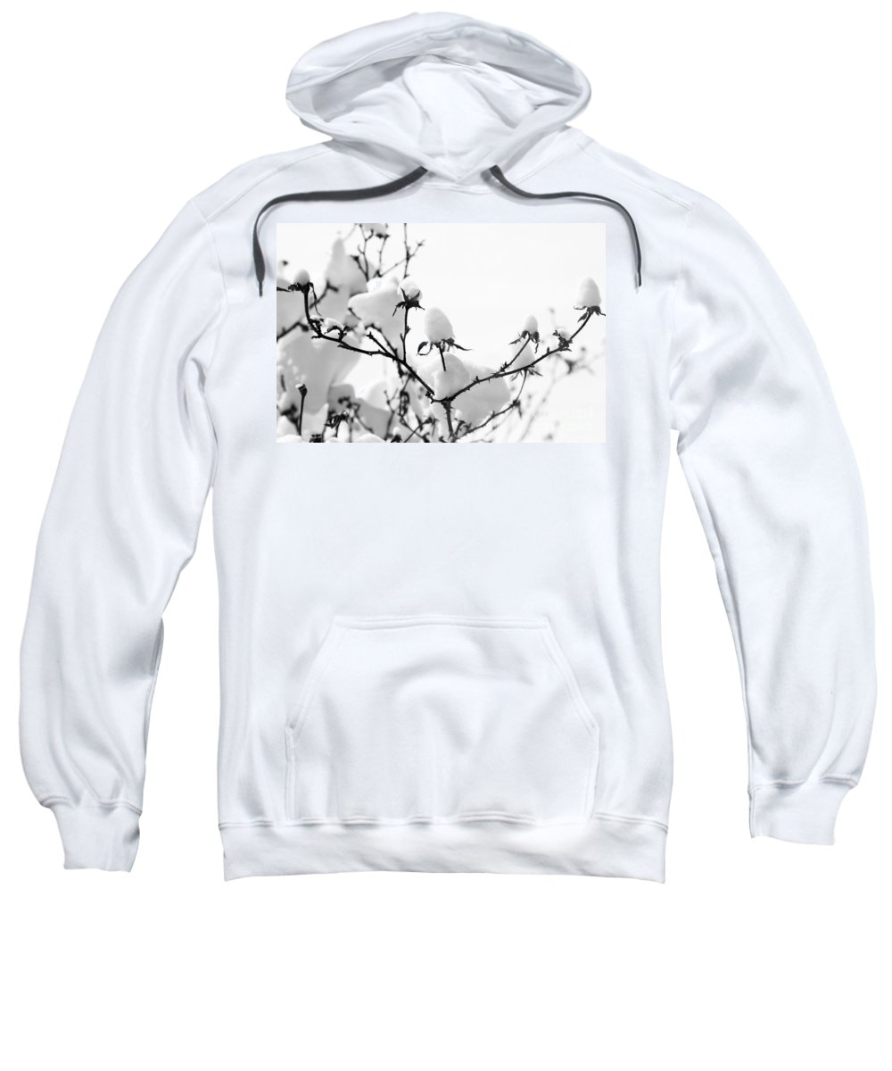 Branches Sweatshirt featuring the photograph Branches by Amanda Barcon
