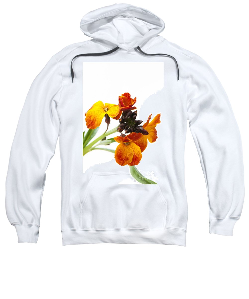 Floral Sweatshirt featuring the photograph Bright And Beautiful by Anne Gilbert