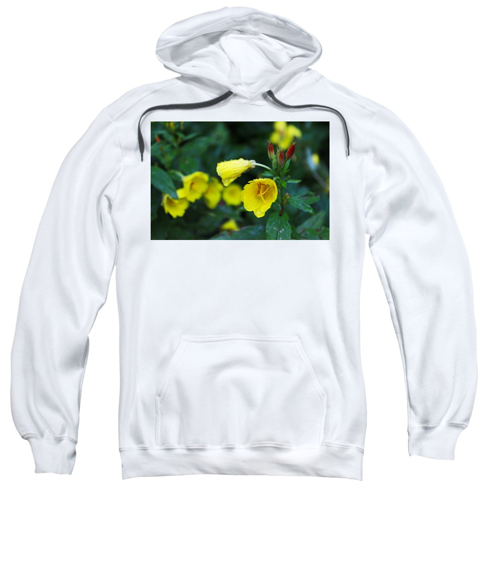 Flowers Sweatshirt featuring the photograph Budding Friends - Missouri Primrose by Spencer Bush