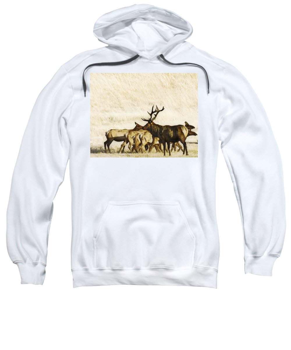Landscape Sweatshirt featuring the photograph Bull Elk by Karen W Meyer