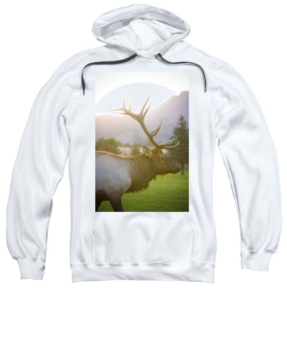 Elk Sweatshirt featuring the photograph Bull Elk Profile by James BO Insogna