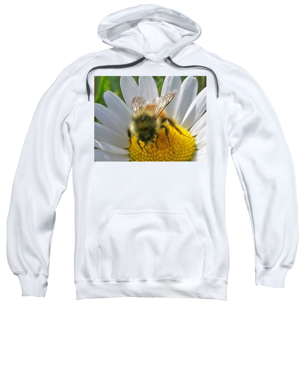 Bumblebee Sweatshirt featuring the pyrography Bumblebee by Amber Carpenter