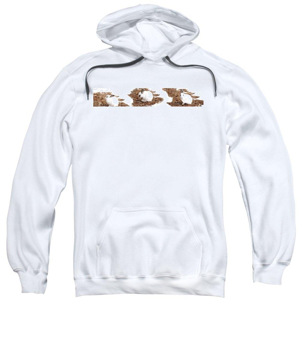 Bunnies Sweatshirt featuring the photograph Bunnies Three by Lisa Knechtel