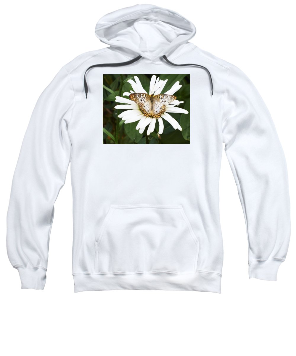 Butterfly Sweatshirt featuring the photograph Butterfly And Flower by Steve Ondrus