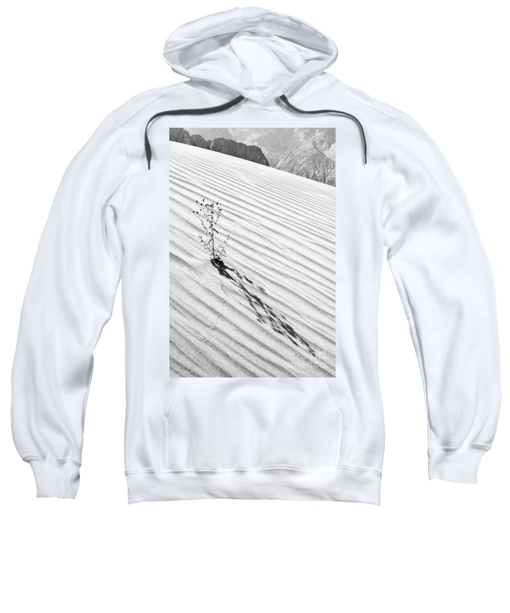 Cactus Sweatshirt featuring the photograph Cactus In Desert by Hitendra SINKAR