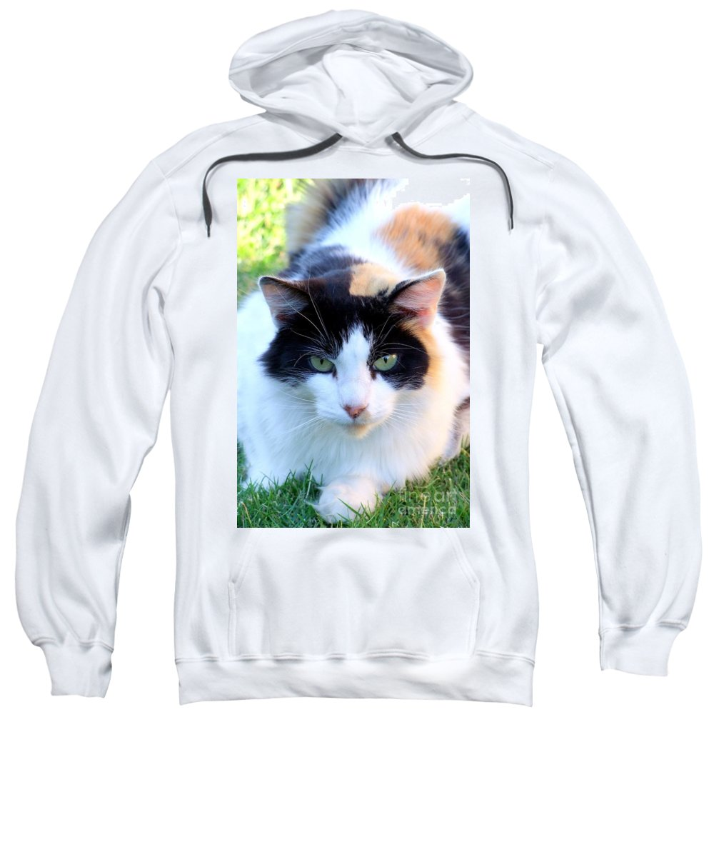 Kauai Animals Sweatshirt featuring the photograph Calico 2 by Mary Deal