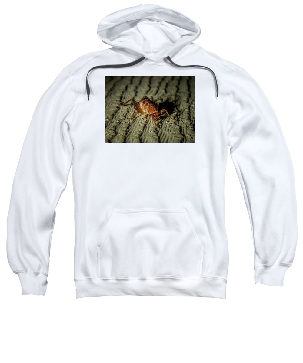 Sweatshirt featuring the photograph Camel Cricket by Reed Tim
