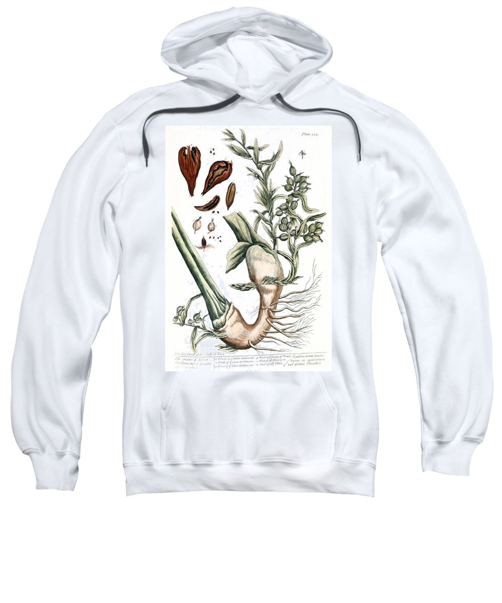 1730s Sweatshirt featuring the photograph Cardamom, 1735 by Granger