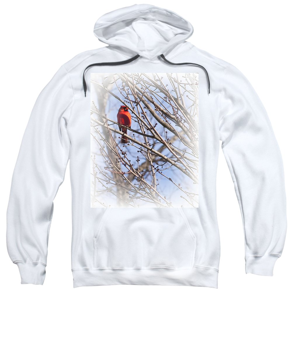 Backyard Sweatshirt featuring the photograph Cardinal I by Gary Adkins