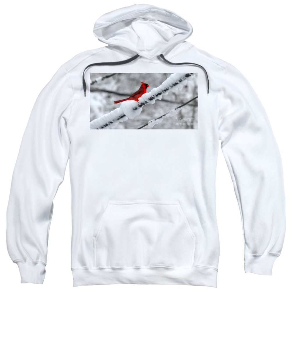 Sweatshirt featuring the photograph Cardinal In The Snow by Lennie Malvone
