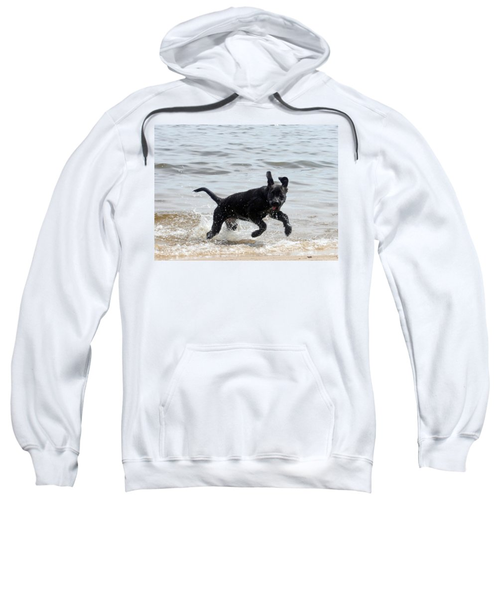 Dog Sweatshirt featuring the photograph Catch Me If You Can by Lisa Stanley