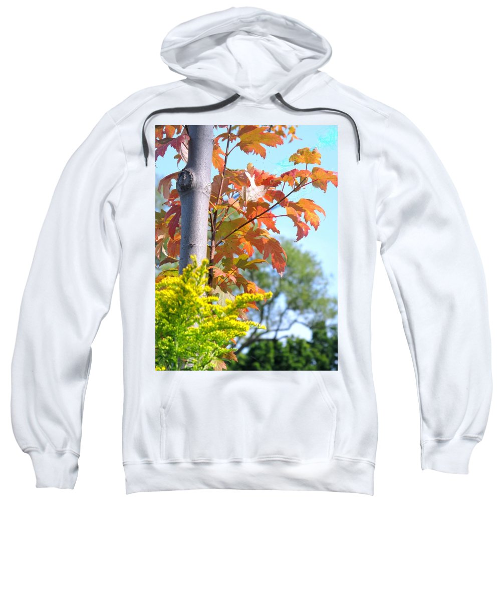 Maple Sweatshirt featuring the photograph Changing Leaves by Ian MacDonald